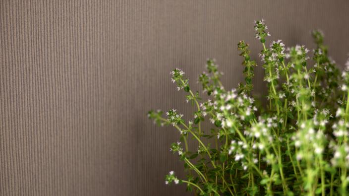 Wandgestaltung mit Vliestapete, Unistruktur in Kaffeebraun, frisches Grün