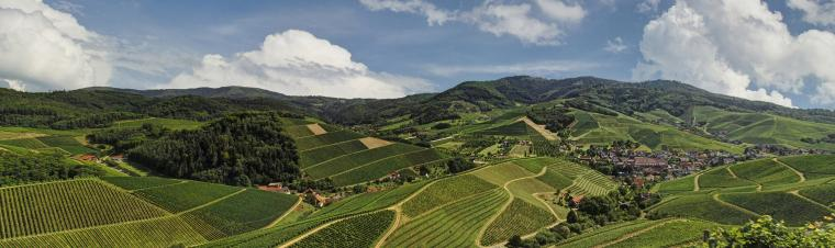 Weinlandschaft Kaiserstuhl im Sommer, Hügel, Wälder